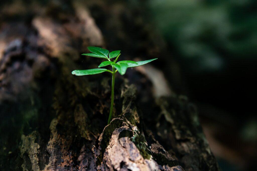 Pflanze als Symbol des Lebens